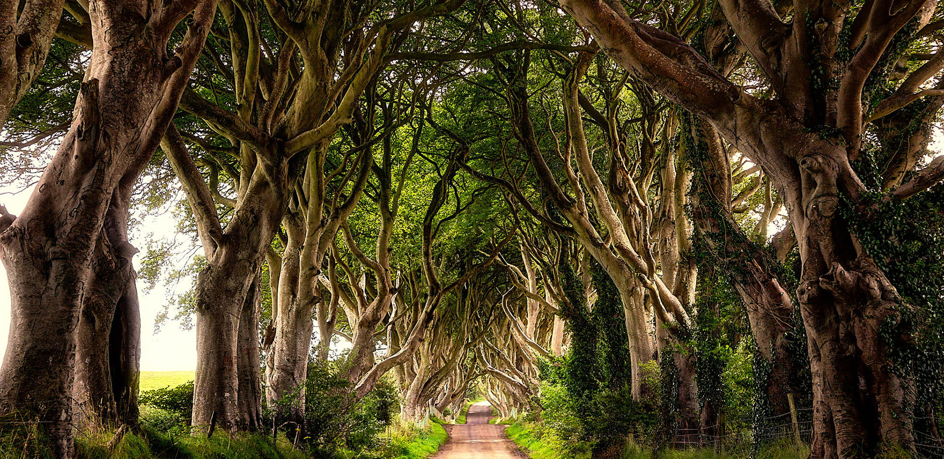 The-Dark-Hedges-Northern-Ireland-Wallpap