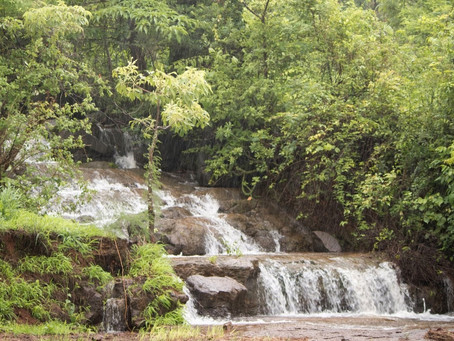 Explore this 'Sacred' Forest near Pune