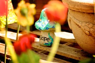 through my eyes: Spring on Harwell