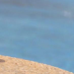 Tapones de Baño, protege los oídos contra la entrada del agua