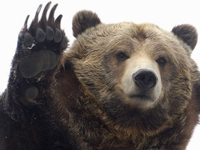 Bear With Us!