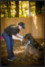 Dog Trainer Northern Virginia
