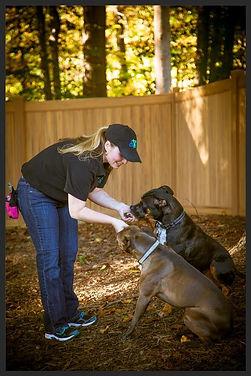 Dog Trainer Northern Virginia