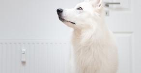 Wie mein Hund die Magendrehung überlebte