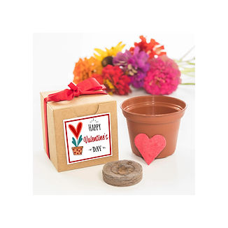 Valentines Day Gift Flower Grow Kit.jpg