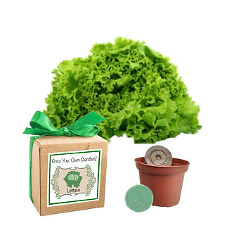 lettuce seed grow kit.jpg