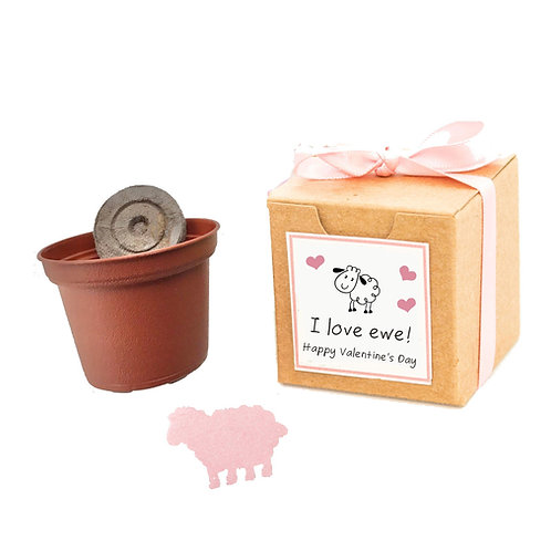 Valentine's Day Flower Seed Grow Kit