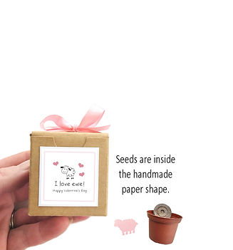 valentines day seed grow kit plant gifts