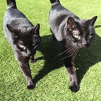 Monty & Ninja