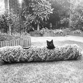 Het raffinement van een kat