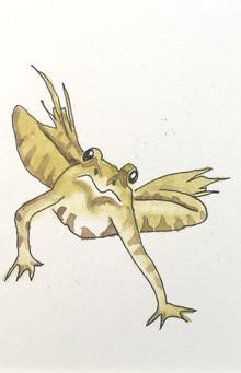 Frog.jpeg