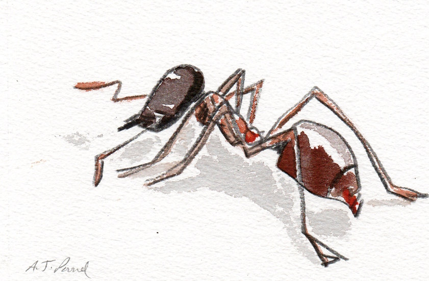 Ant I