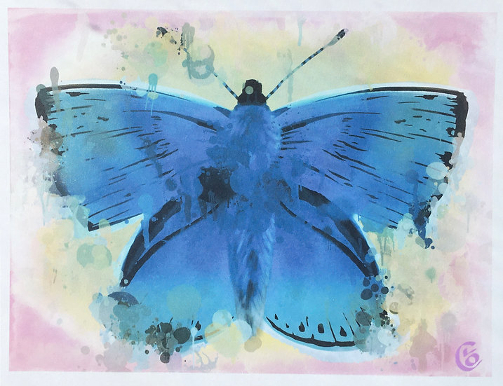 Butterfly Adonis Blue
