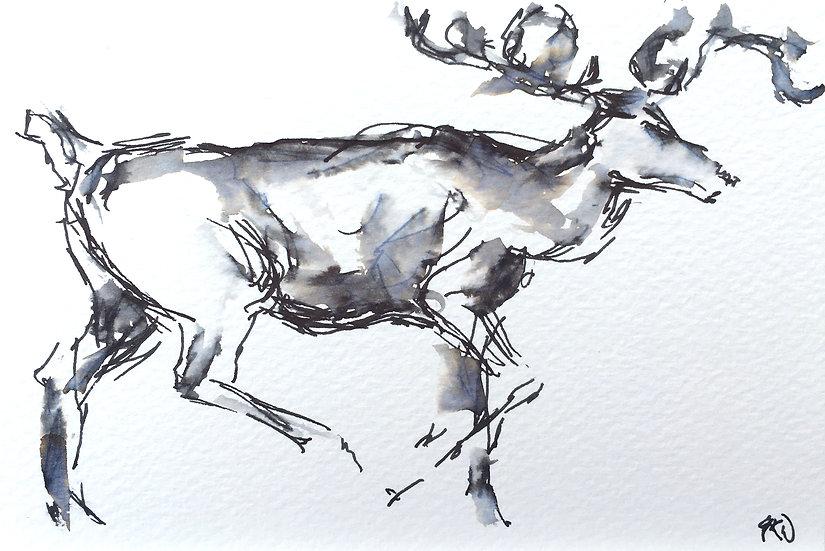 Reindeer, Lapland I