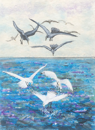 Diving Gulls.jpeg