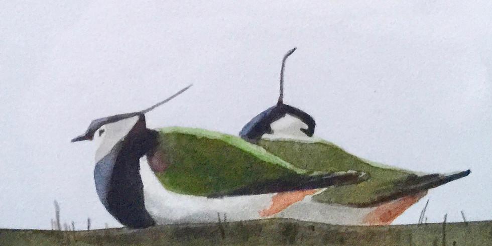 Summer 2019 : Shoreline Birds : Adele Pound
