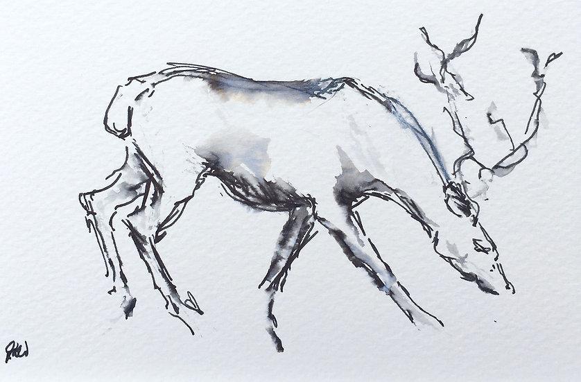 Reindeer, Lapland II