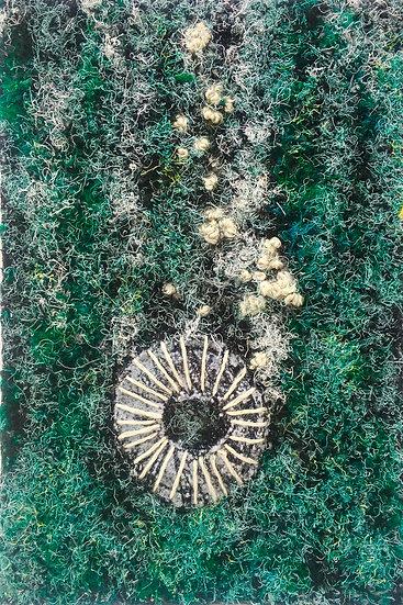 Coastal Textures I