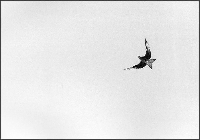 Kite in Flight, Wales