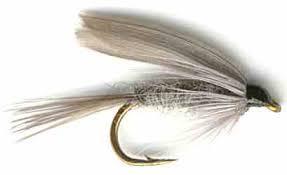 English Dun Fly