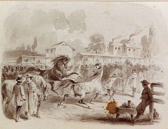 Horse Auction in the Public Square