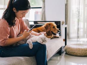 【ZumVet在香港推出首個虛擬獸醫平臺】