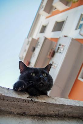 Roman Kitty