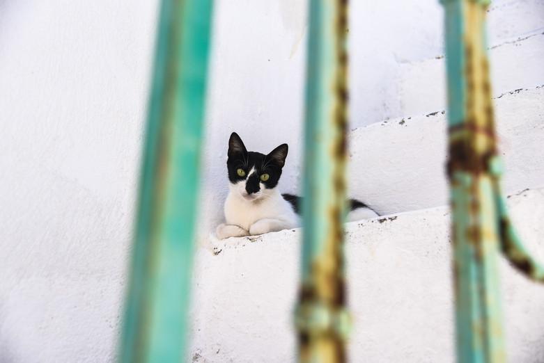 Naxos Kitten