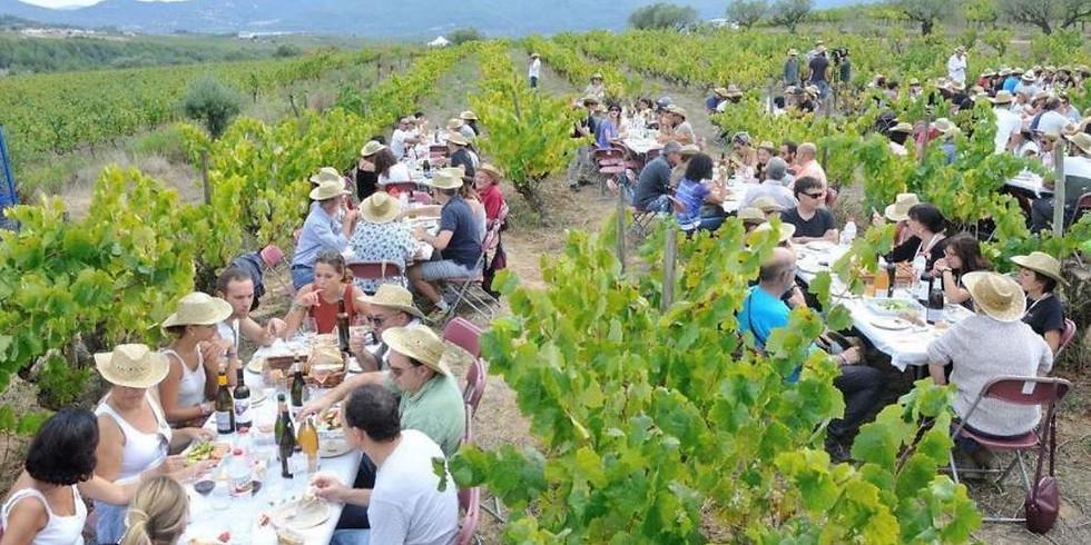 Verema solidaria Mascorrubi - harvesting solidarity and lunch!