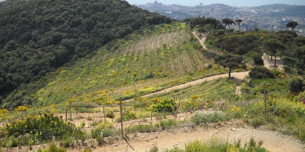 HIKE in Alella + Visita a los vinyedos - 12 DO's en 12 Meses 🍷🍇