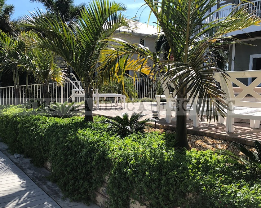 Spindle palms in landscape