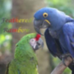 Feathered Rainbow Cover.jpg