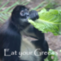 Eat your Greens Cover 1.jpg