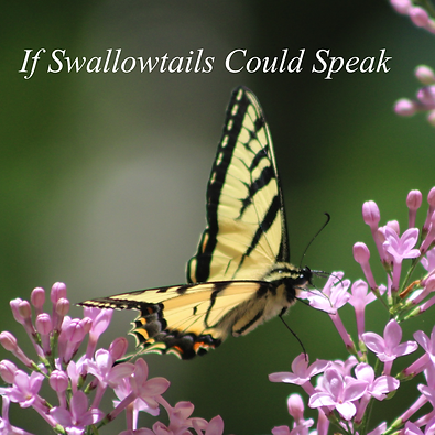 Swallowtails Cover.png