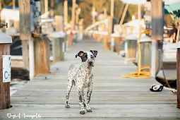 mixed breed puppy on a pier