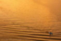 Gold with Kayak danipress photography da