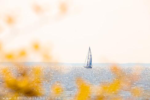 Sailboat from Shore danipress photography danielle w lundberg sail beach maryland annapoli