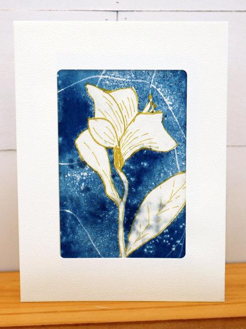 Cyanotype Greeting Card