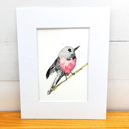 Grey and Pink Bird
