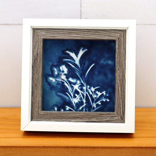 Cyanotype Mini 1