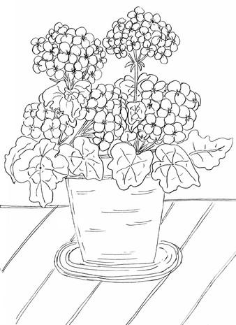 Front Porch Geraniums