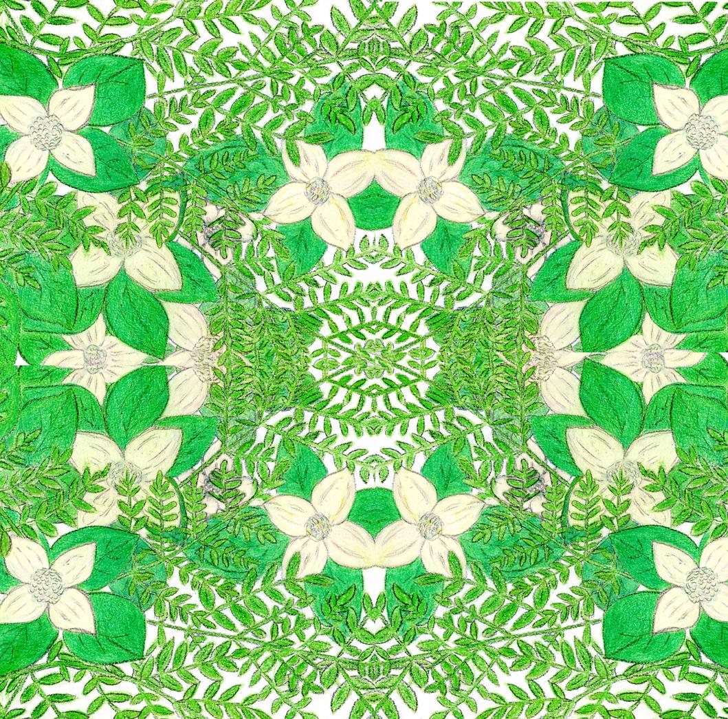 Fern Kaleidoscope