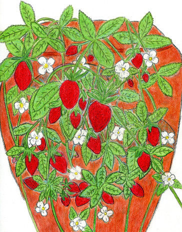 The Strawberry Pot
