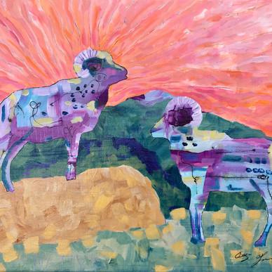 Bighorn Sheep at Sunrise