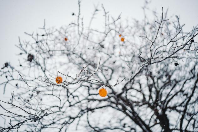 fruit in snow