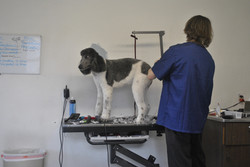 Lucky the Poodle and Groomer Parke
