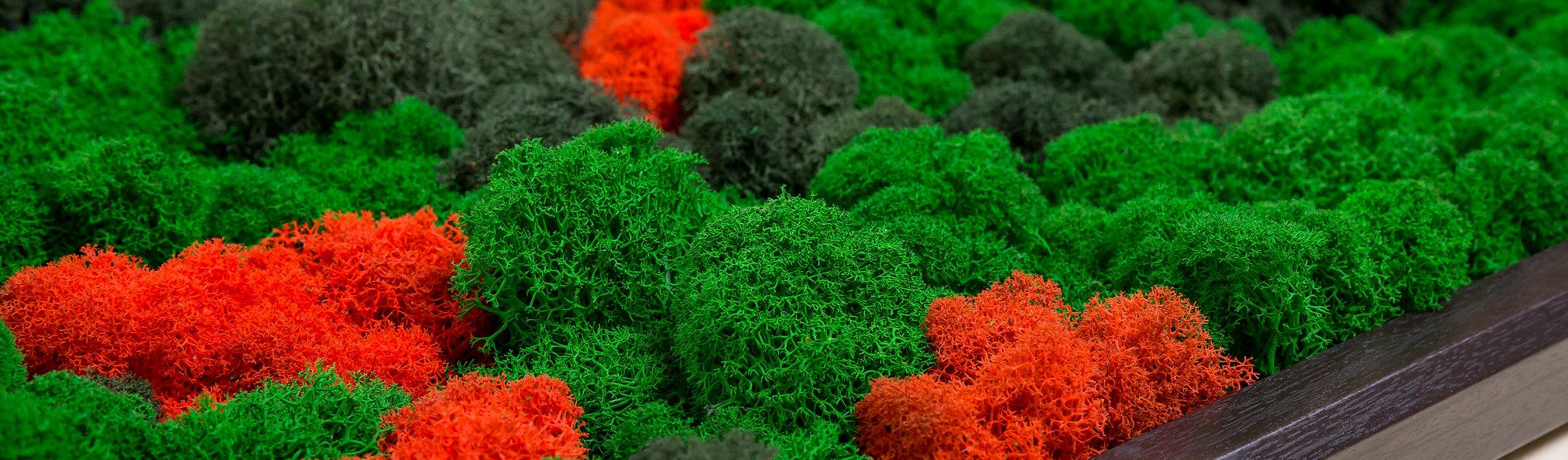 зеленая панель стабилизированный мох кудрявый