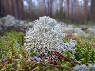 Стабилизированный мох – что это такое?