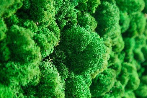 Стабилизированный мох/ягель