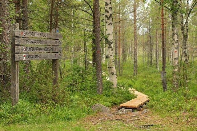 Luontopolku Suomessa kesäaikaan